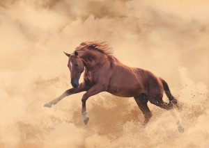 Red-horse1