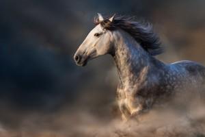 pale-horse1